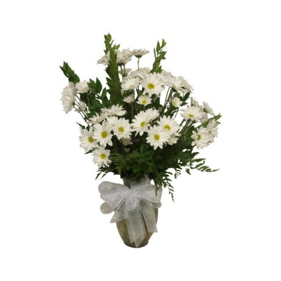 L'arrangement de marguerites blanches