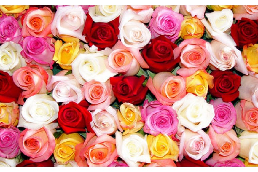 Qui dit fleur dit la rose!